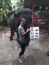 Visit to an elephant sanctuary