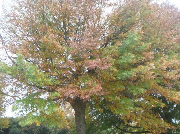 Autumn, my favorite season